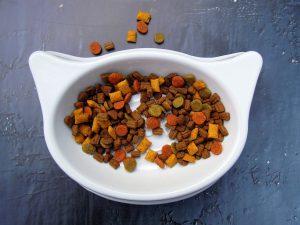 מזון לחתולים