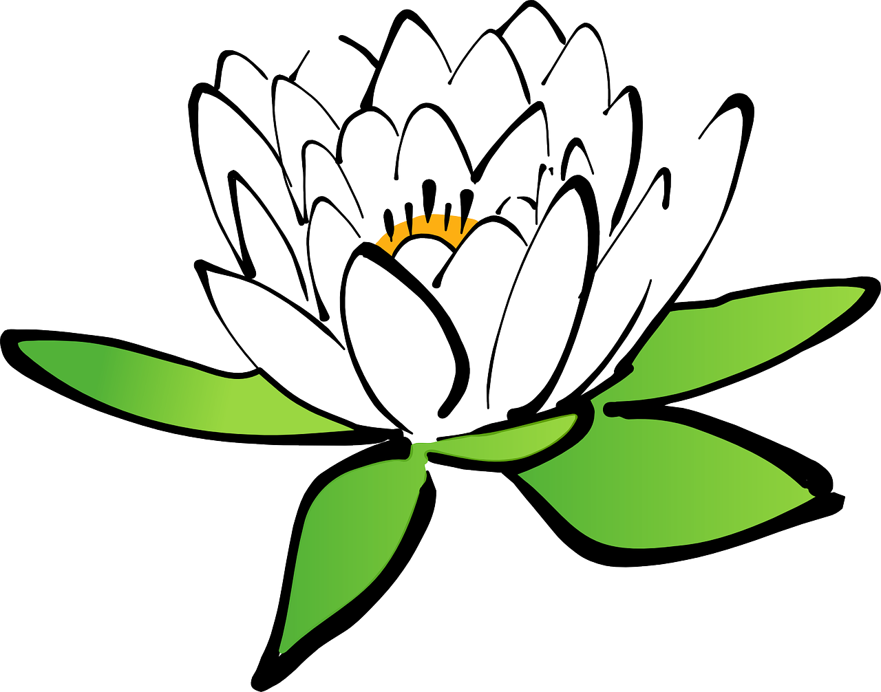 פרח מצויר
